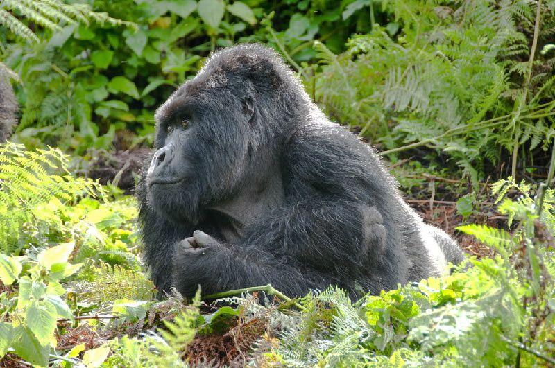 4-Day Rwanda Gorilla Trekking and Lake Kivu Adventure