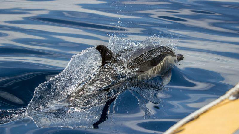 Whale Watching Azores Cruise and Vila Franca do Campo Boat Tour