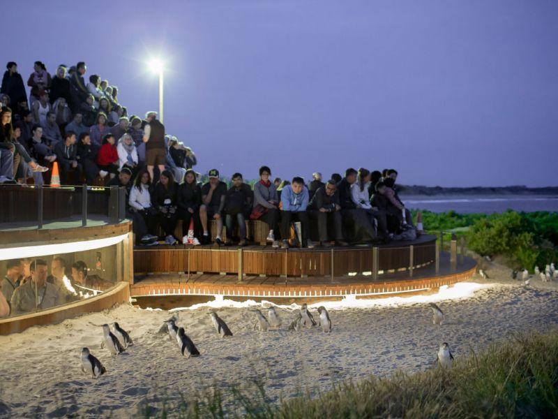 Penguin Parade Day Tour