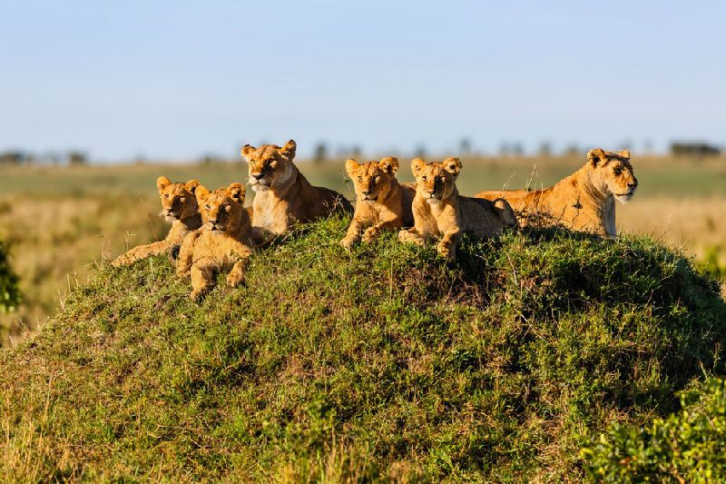 8-Day Kenya Magnificent Maasai Mara Safari from Nairobi**Stay in 5-star local hotels**