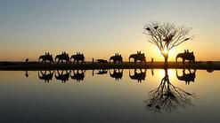 sout africa tours:Splendors Of South Africa & Victoria Falls With Botswana