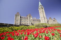 bus trips from boston to atlantic city:2-Day Canadian Tulip Festival Tour in Ottawa From Boston