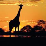 kenya vacation offers:Kenya & Tanzania: The Safari Experience