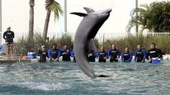 compare airline ticket prices:Miami Seaquarium - Ticket Only