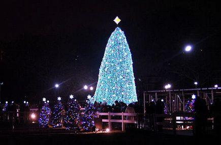 1-Day Adventure Aquarium, Christmas Village and Longwood Gardens Tour from New York