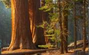 Sequoia & Kings Canyon National Park Tours