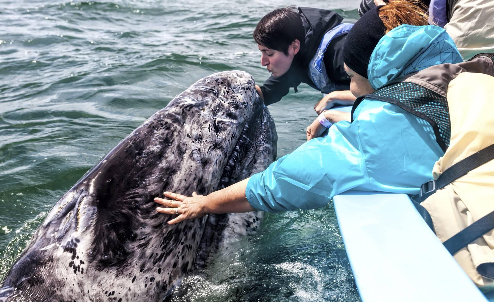 4-Day Baja California Whale Watching Tour