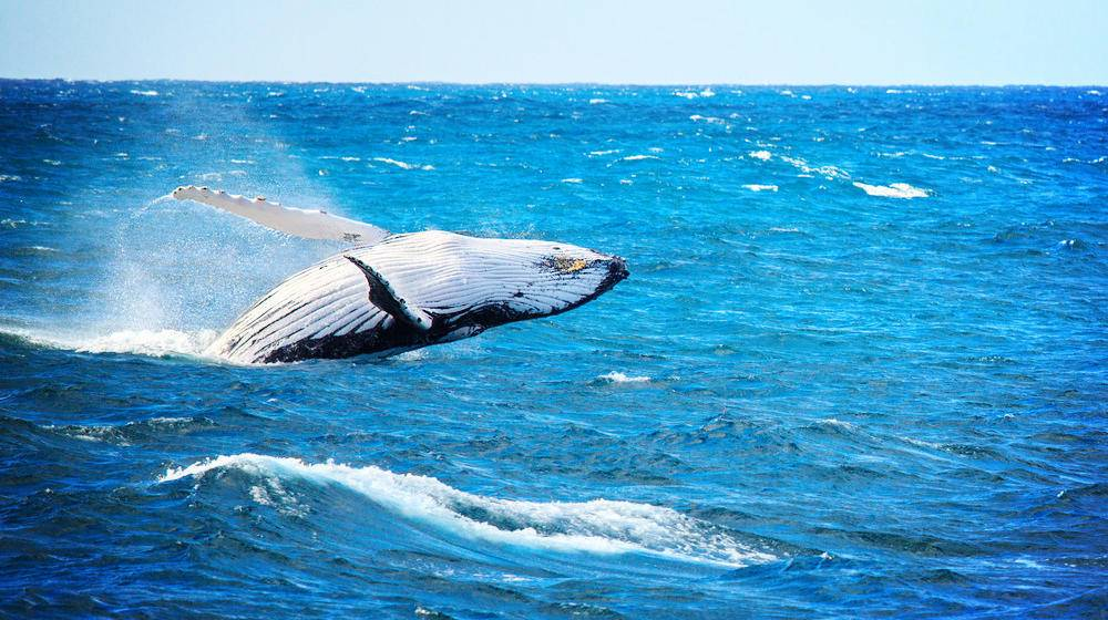 1-Day Aquarium of the Pacific Tour from LA | Tours4Fun