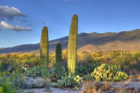 Recorrido de 4 Dias por Arizona y Nuevo Mexico en Autobus