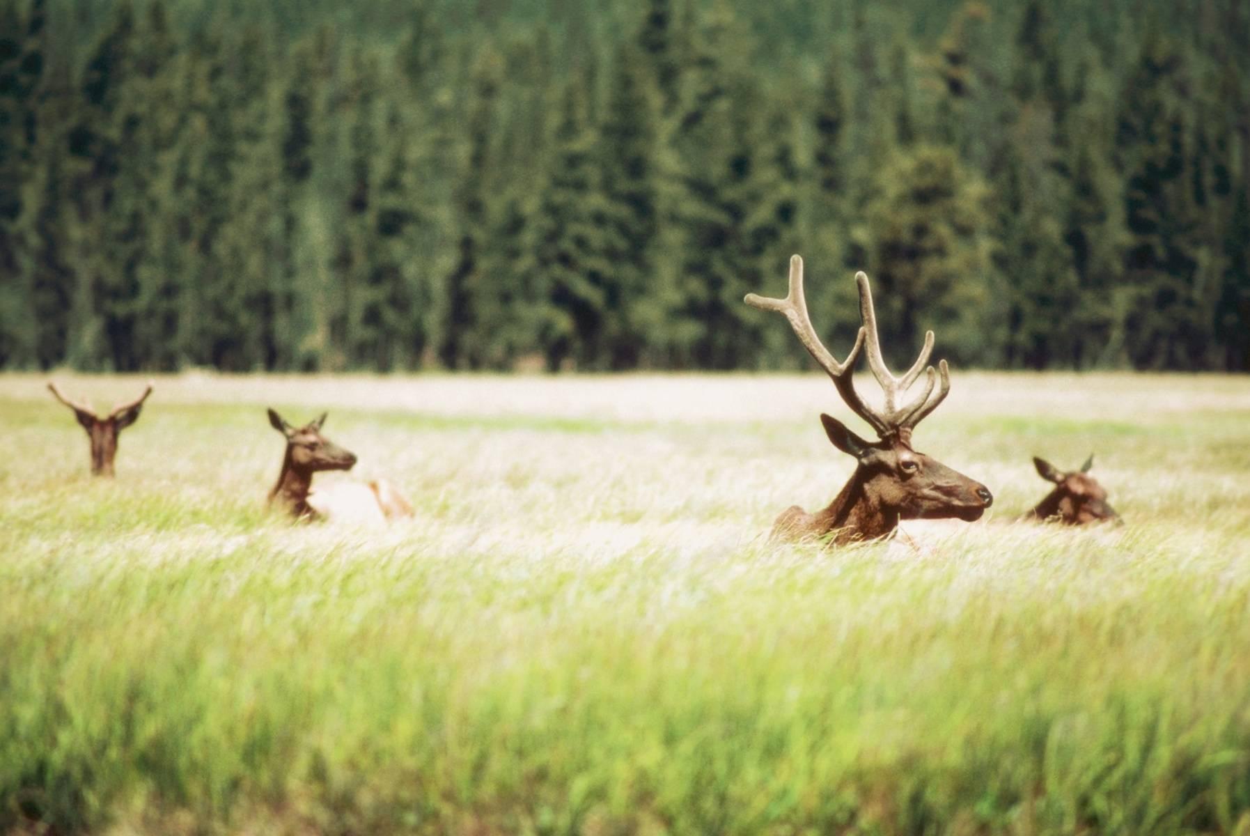 12-Day West Coast Highlights Tour: Shoshone Falls, Yellowstone Overnight & Grand Canyon
