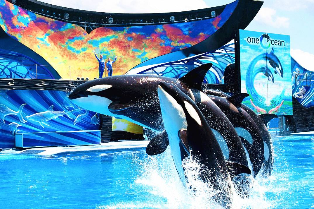 6-Day Orlando Classic - Theme Parks and 1-Day Excursions