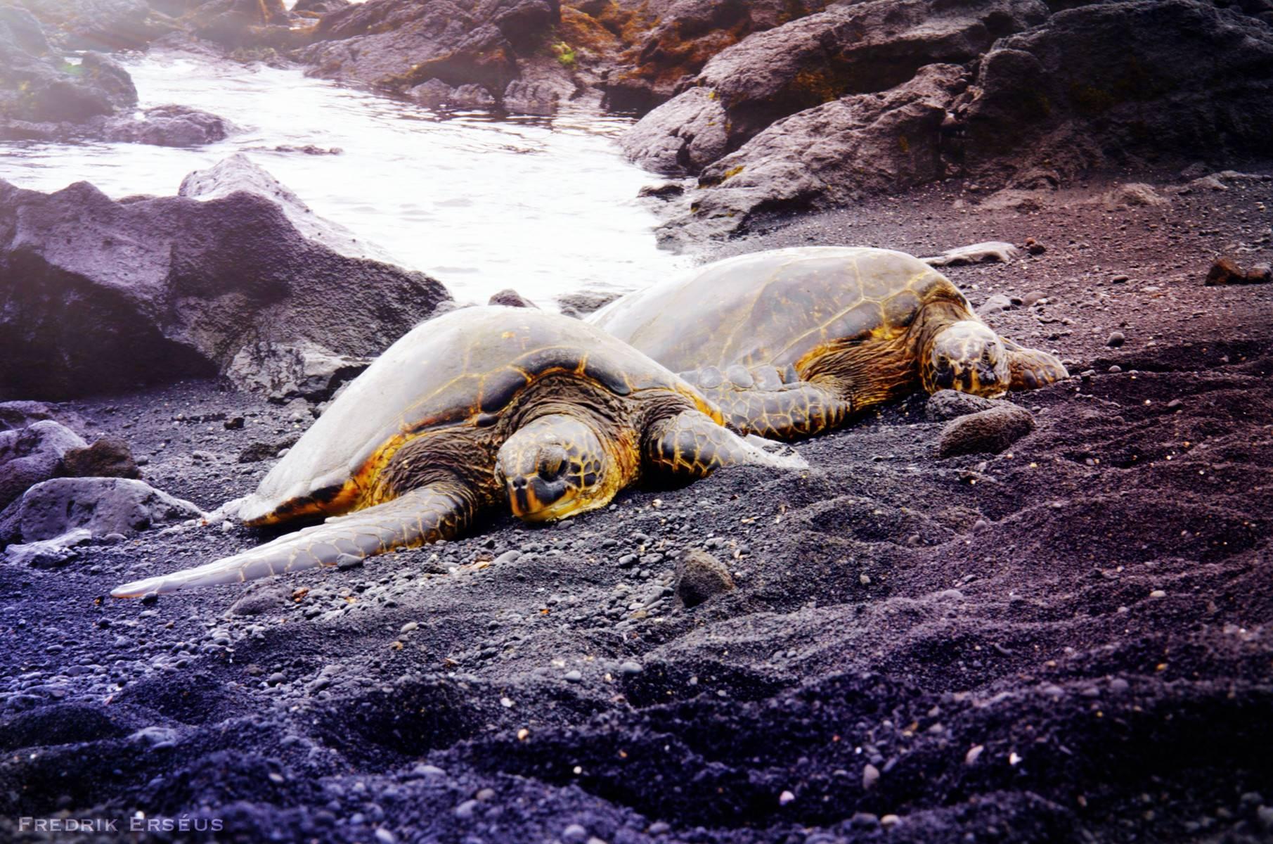 4-Day Hawai Tour Package From Hilo to Honolulu: Big Island & Maui