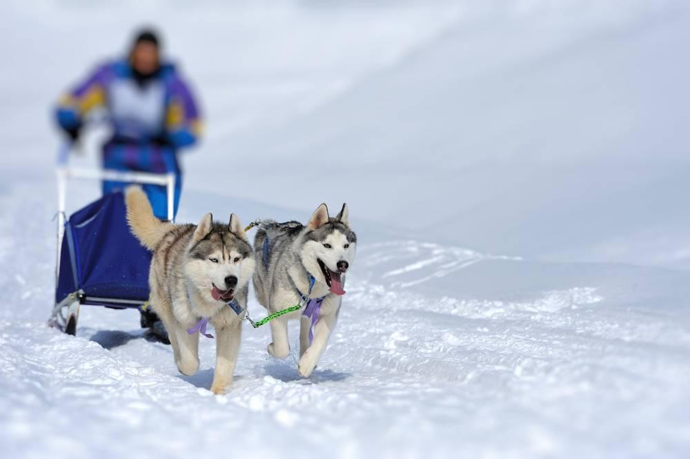 1-Day Matanuska Glacier Trekking Tour