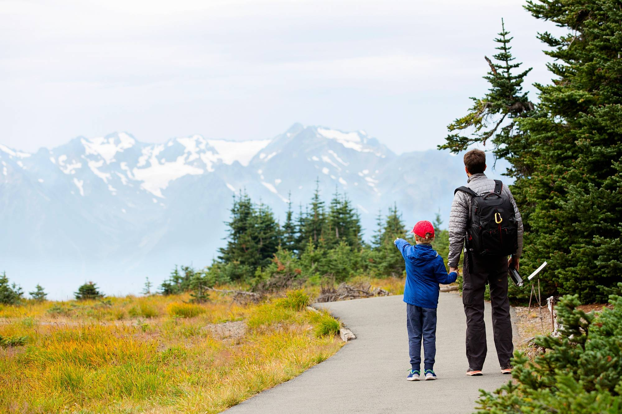 1-Day Excursion to Olympic National Park
