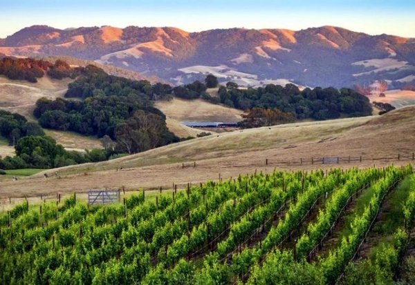 1-Day Napa & Sonoma Wine Country Tour w/Lunch