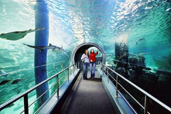 Melbourne Attraction Pass: Melbourne Aquarium and Eureka Skydeck 88