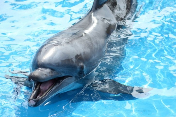1-Day SeaWorld of California Tour