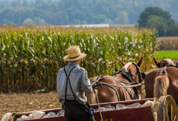 2-Day Bus Tour: Amish Village, Independence Hall, Liberty Bell, New York from Washington DC