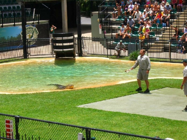 Australia Zoo Tour via Croc Express from Brisbane