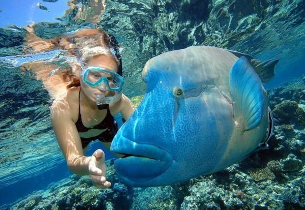 2-Day Magical Great Barrier Reef & Grand Kuranda Combo Tour