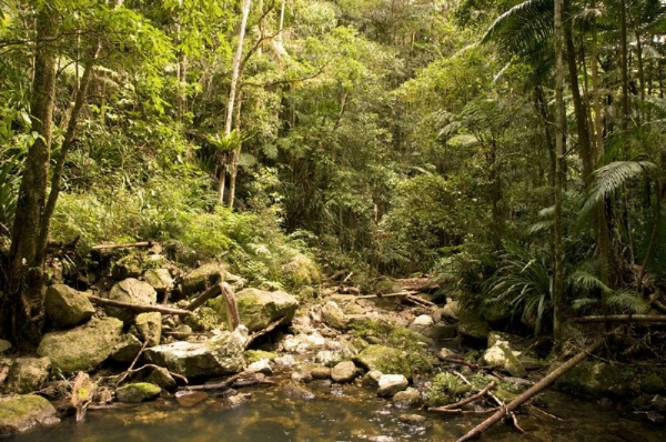 Byron Hinterland & Rainforest Adventure Tour