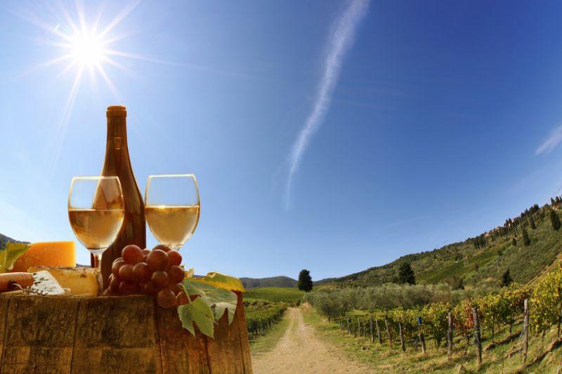 Tuscany Wine Tour from Pisa: Chianti Wine Region