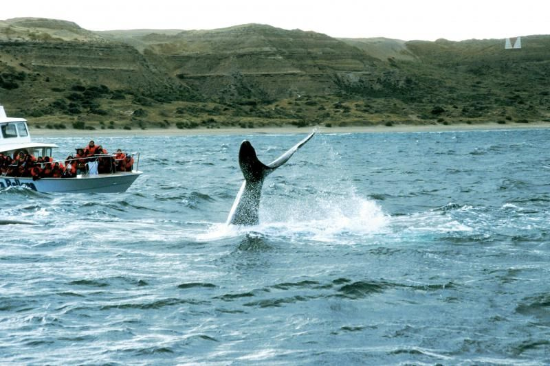 Peninsula Valdes Full Day with Puerto Piramides Whale Watching Tour