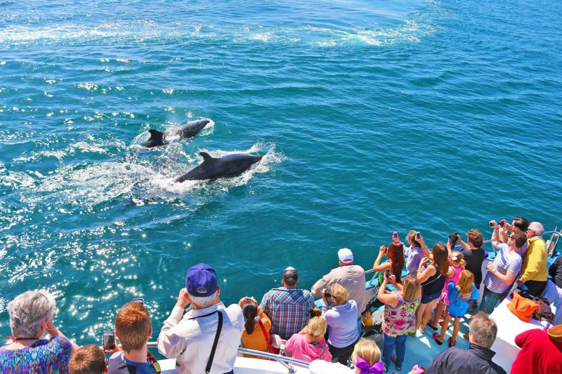 1-Day Whale Watching & Dolphin Cruise
