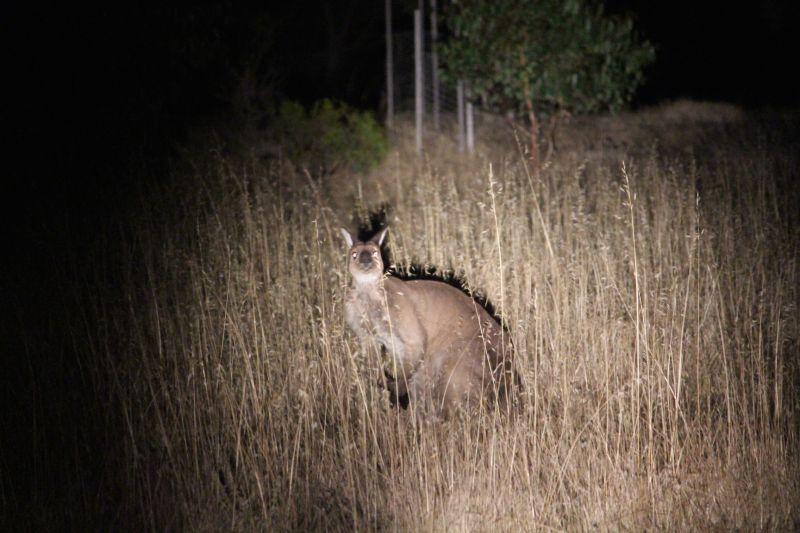 Kangaroo Island Nocturnal 4WD Tour