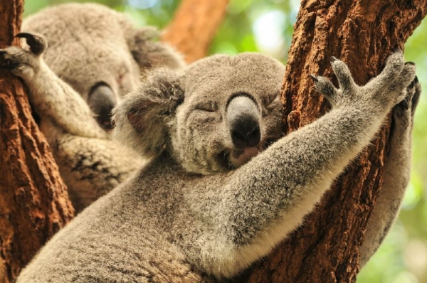 Koala & River Cruise - Roundtrip w/ Entry into Lone Pine