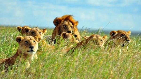 11-Day Tanzania Safari: Serengeti, Ngorongoro, Lake Natron, & Lake Manyara