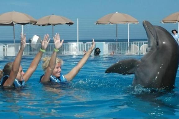 1 Día: Nade con los Delfines en Miami