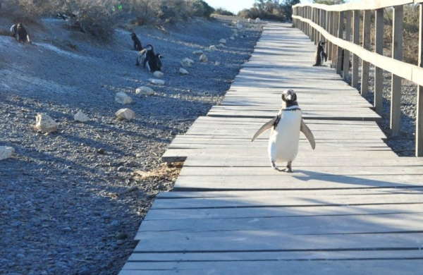 Punta Tombo Penguin Colony Tour From Puerto Madryn
