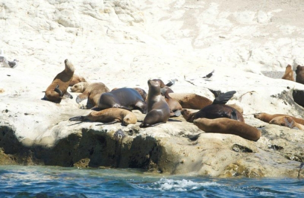 Snorkeling With Sea Lions - Puerto Madryn