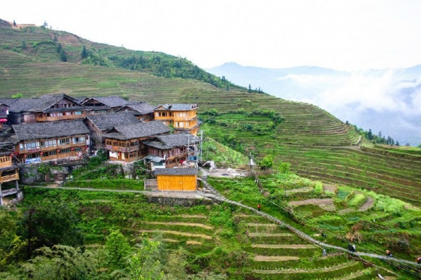 Guilin Sightseeing Tour: Dragon Backbone's Rice Terraces and Ping'an Village
