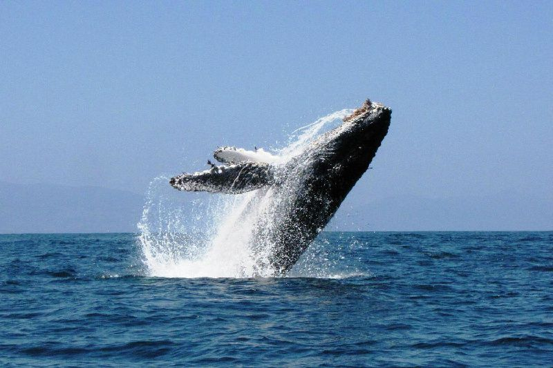 Los Organos Whale Watching