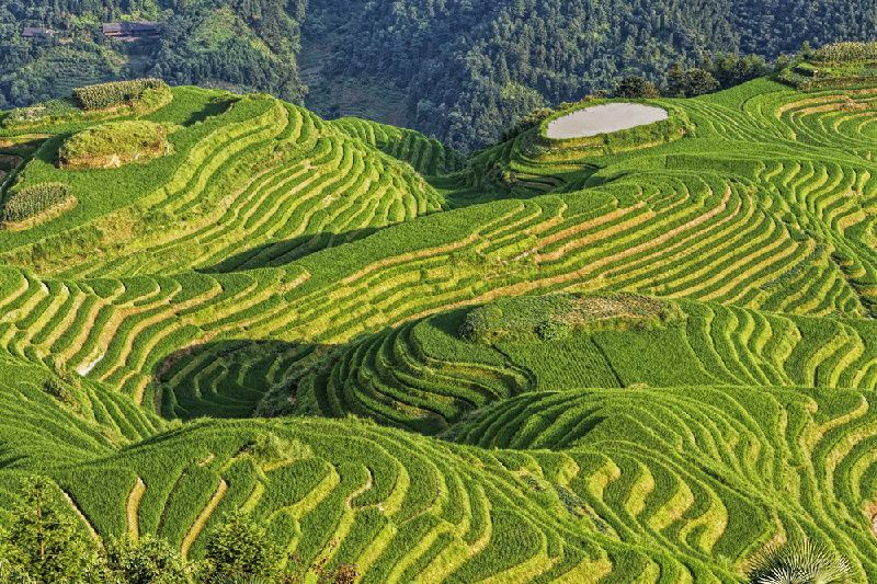 Guilin Private Day Tour: The Longji Rice Terraces in Longsheng