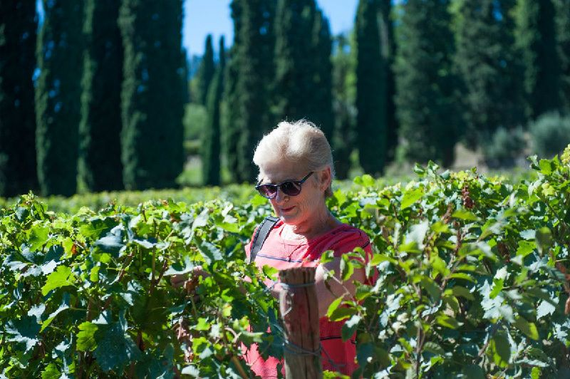 Valpolicella Wine Tour from Verona