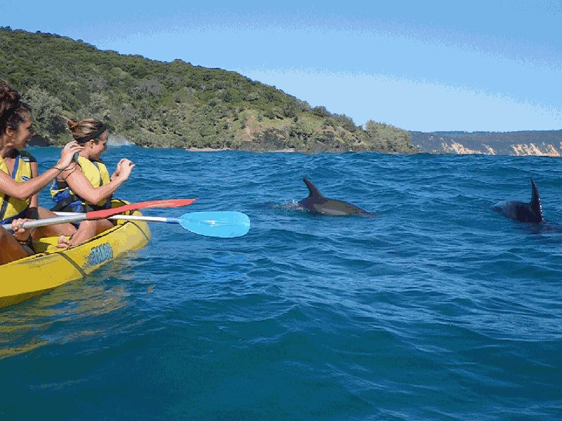 Half-Day Dolphin View Kayak & Great Beach Drive Adventure From Rainbow Beach