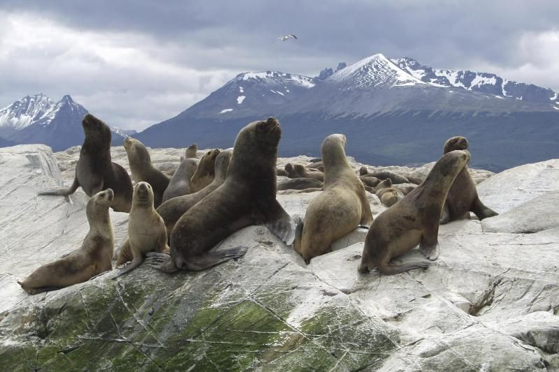 Ushuaia Catamaran Voyage to Seal & Bird Islands With Hotel Transfers