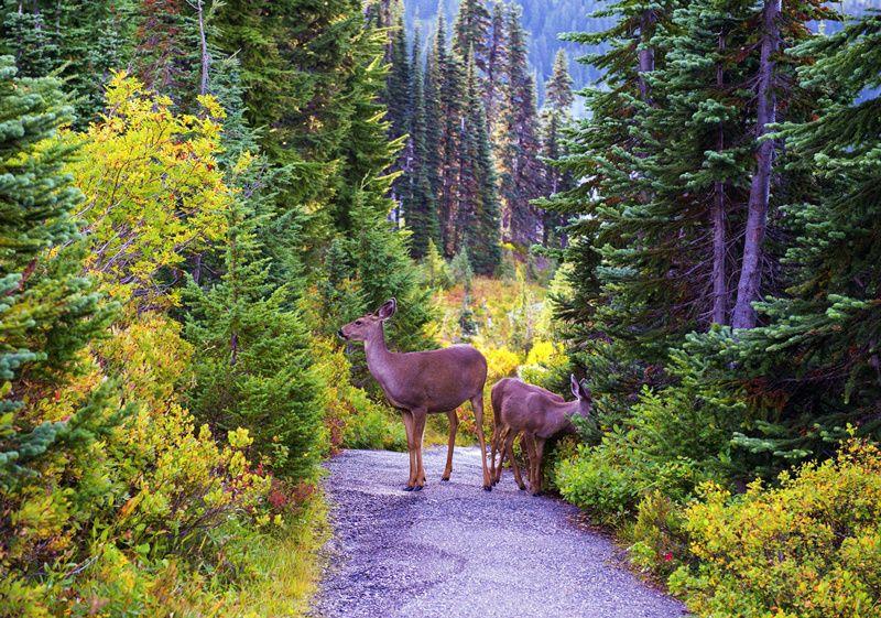 2-Day Mt. Rainier & Olympic National Park Tour