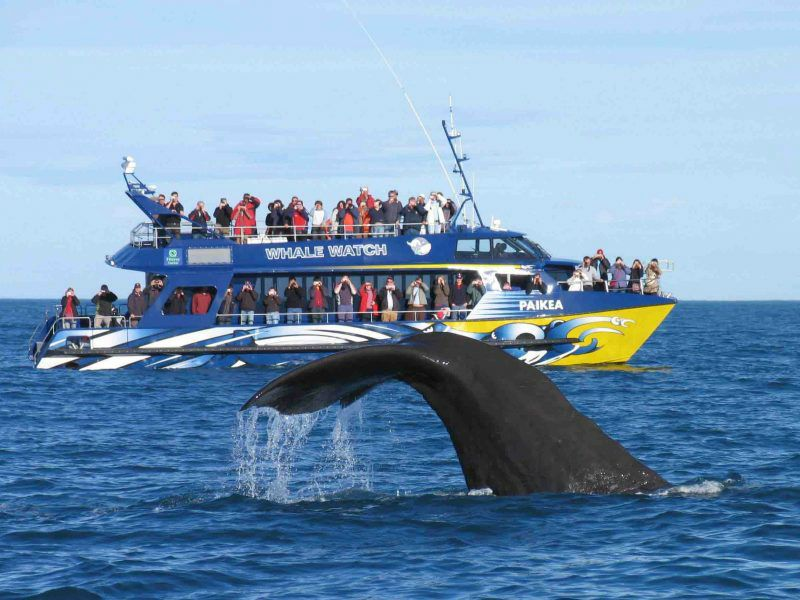 Kaikoura Whale Watching Cruise