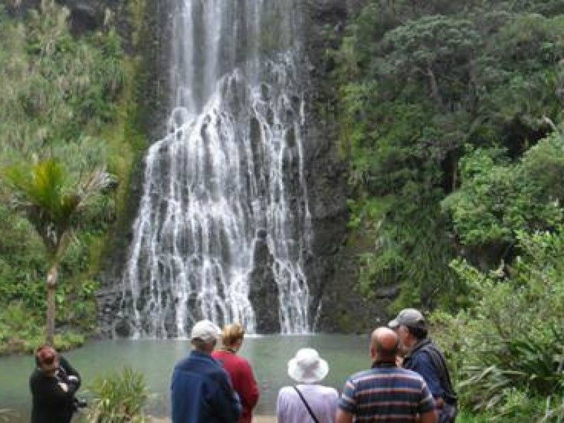 Highlights of Auckland City Tour + Wilderness Experience