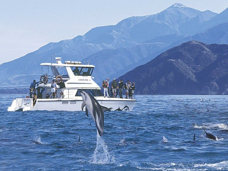 Kaikoura Swimming with Dolphins W/ Transfer From Christchurch