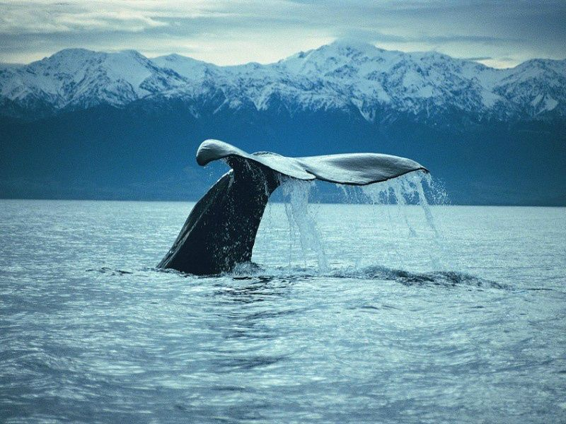 Kaikoura Whale Watching Cruise W/ Transfer From Christchurch