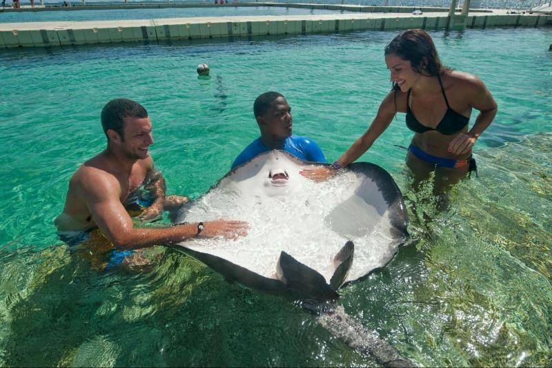 Marinarium Snorkeling Cruise From Punta Cana