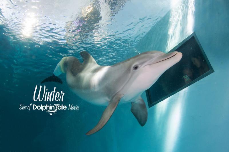 Clearwater Marine Aquarium Ticket - General Admission