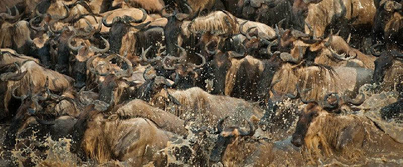 3-Day Masai Mara Migration