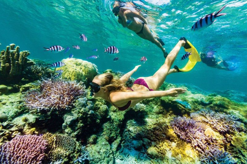 4-Day Fiji Snorkel & Shark Stopover Tour