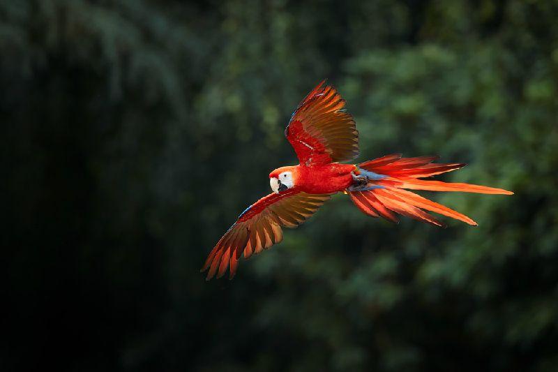 4-Day Manu Bird Watchers Paradise